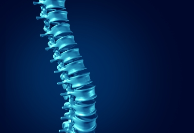 human - spine